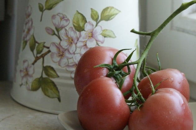 Własne pomidorki