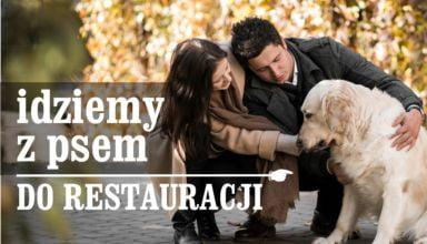 Z psem do restauracji – PRAWO TEGO NIE ZAKAZUJE, co innego właściciel…
